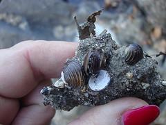 Dirt encrusted shells