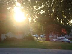 Sunrise linden
