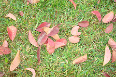 Haiku leaves