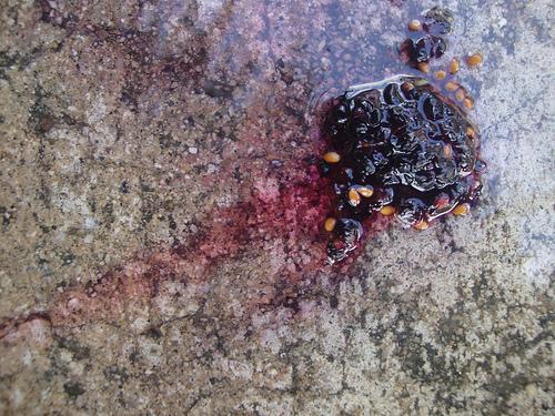 Mulberryresidue