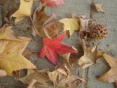 Small autumn flotsam and jetsam