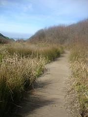 Smallboardwalkpath