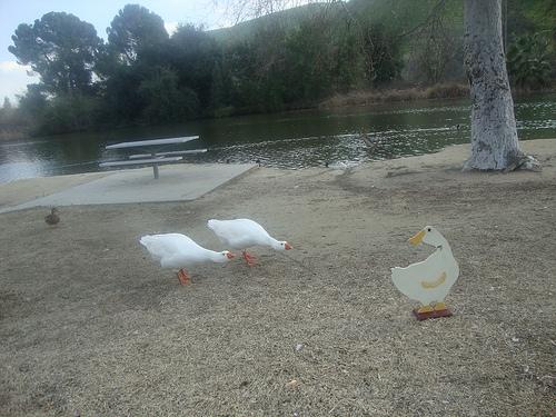 Geese meet gander