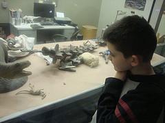 Samuel in Dino Lab