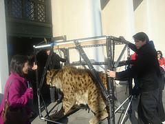 Sabertoothcat1