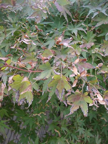 Autumn walk 3