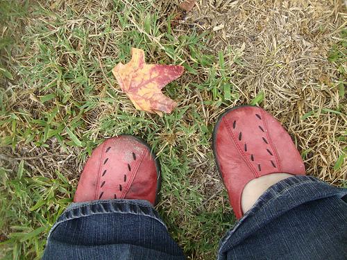 Autumn walk 5