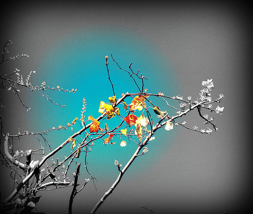 Leaves tell me