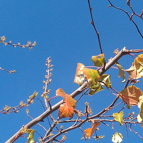 Last years leaves 2012 close