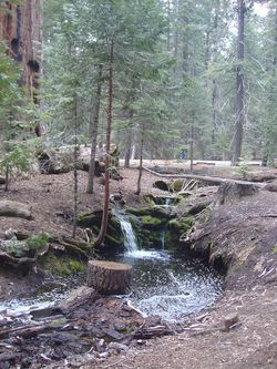 Sequoia stream
