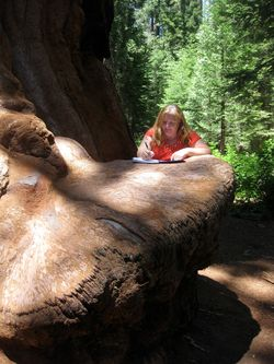 Writing on sequoia pray its wide enough