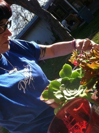 Michelle succulent 4