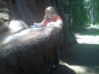 Sequoia writing