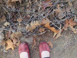 Autumn prep