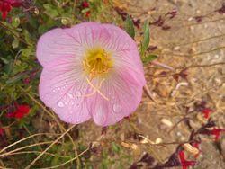 Quiet blossom