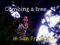 Urban Nature: Climb a Tree in San Francisco