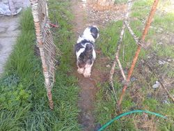 Walt the Wonder Dog walks on his pathway underneath the arch. He seems to like it...