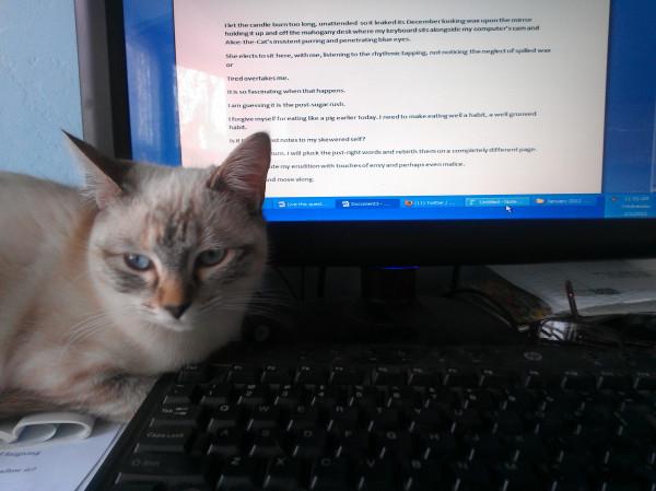 Alice the cat