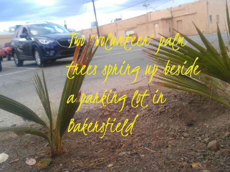 Naturespeaks4 via volunteer palms