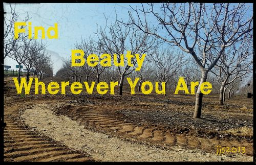 An Orchard in Ducor Reminds Me to Find Beauty Wherever I am....