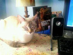 Alicethecat