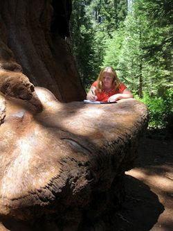 Writing on the sequoia