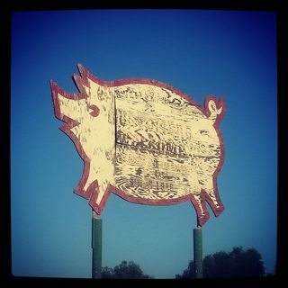 This Quirky Pig was once the Logo for the Kern Valley Packing Company, since 1915!
