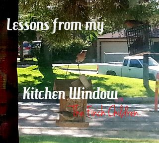 Lessons from my kitchen window