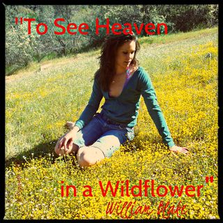 """To See Heaven in a Wildflower"" William Blake - Poetry image + Creativy Prompt"