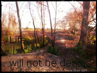"I took this ""Life will not be denied"" photo last night while in one of my favorite places... that had a fire in late May. Life is returning now."