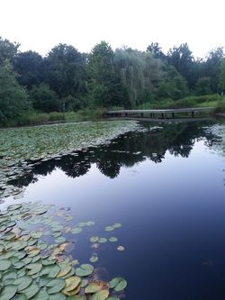 Mill Pond at Ellinor C. Lawrence Park: Such Dense Green was an Unfamiliar Sight for this Californian!