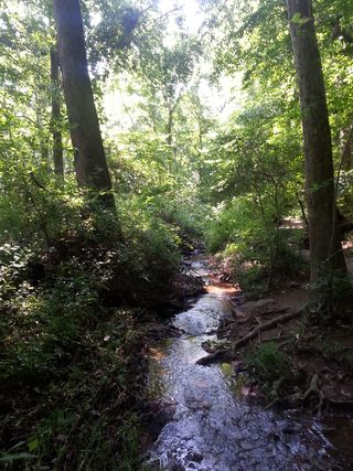 Creek at Ellanor C. Lawrence Park: Leaving space for delights & surprises in your travels plans brings big travel bonus adventures!