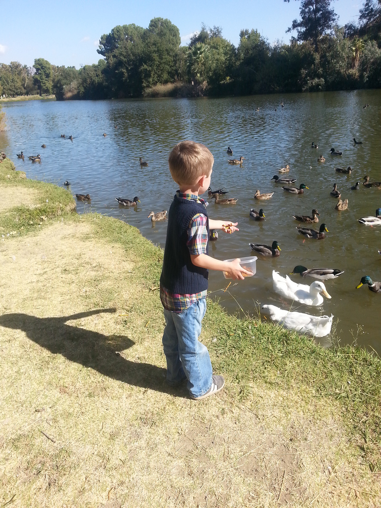 2nd Thursday ciaran and ducks