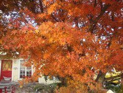 Leaf Orange Explosion: An OctPoWriMo Poem