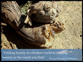 """Beauty in a Broken World"" - Inspiration for Your Blogging, Writing & Creativity: Quote, Prompts & More - Is that a vine or a fossil?"