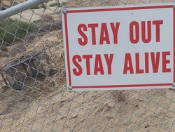Aedm 14 stay out stay alive