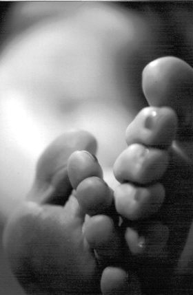 Echo park toes