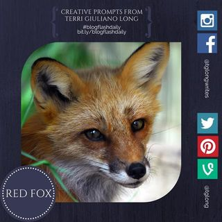 Red fox blog flash daily july 21