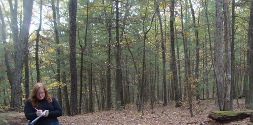 Here I am, writing in the Walden Woods: October, 2011