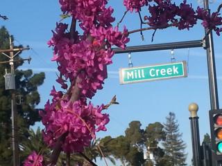 Purple flowers grow on a tree across the street from Mill Creek Park in Bakersfield