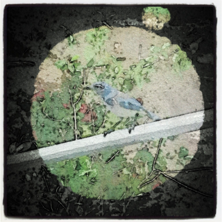 The Blue Jay Sings: You've Wone the Lottery! and other April Moon Nuances