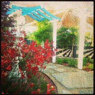 Sister city garden from instagram
