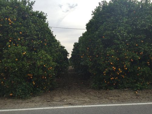 Ventura Adventure 4 orange grove 1