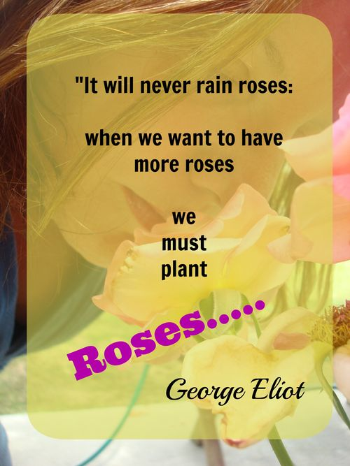 Plant roses