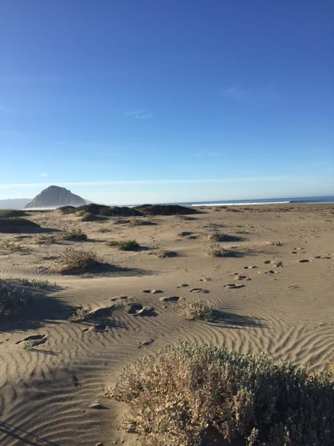 Morro Rock looms in the distance: I am standing on the edge of low level dunes. Love the textures here and the air smelled so remarkable!