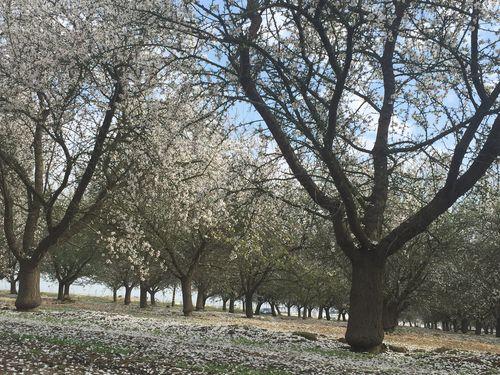 Feb 22 wip menopausel orchard