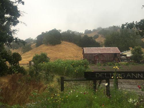 Grats rain gives permission to take it slow