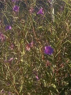 These flowers in this light - truly uncapturable with my phone's camera - are what called me into this creative moment