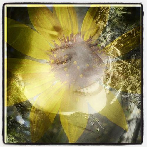 I am a golden sunflower obviously