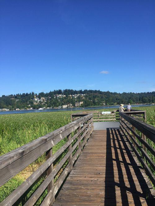 Want to be purple boardwalk platform